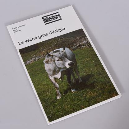Image de La vache grise rhétique